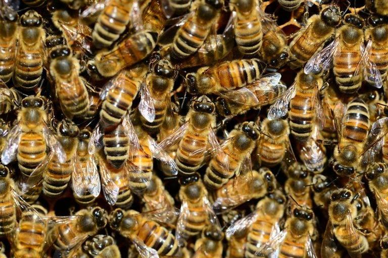Pszczoły z całej Polski zleciały się dzisiaj do Sejmu w czasie expose Morawieckiego. Poczuły lipę
